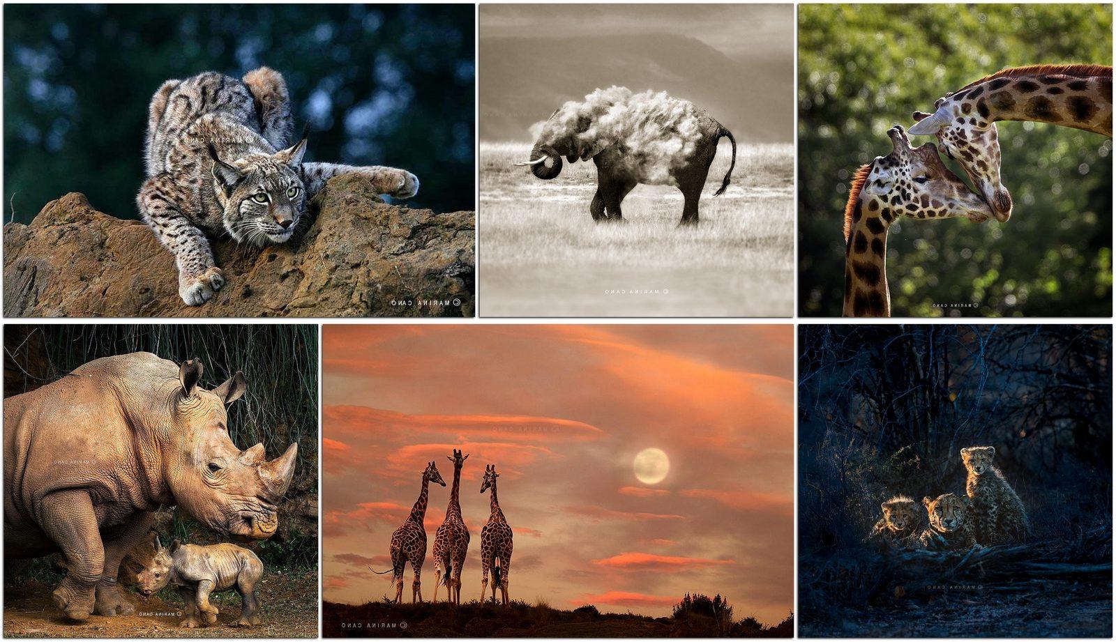 Фотографы дикой природы: Марина Кано