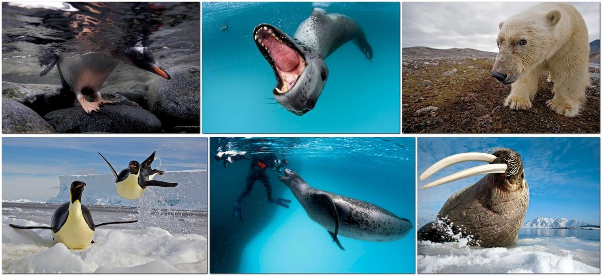 Популярные фотографы: Paul Nicklen
