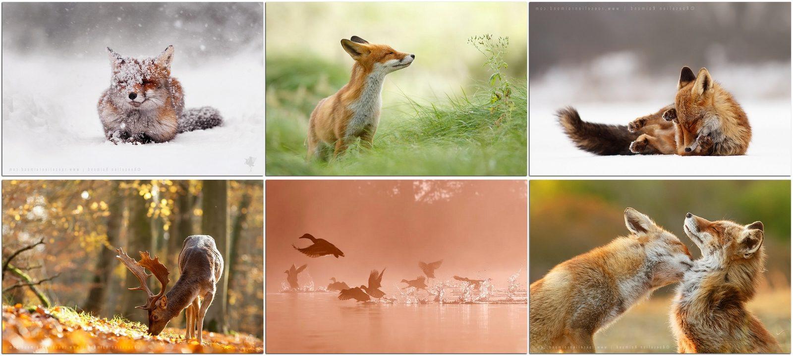 Фотографы дикой природы: Розелин Раймонд