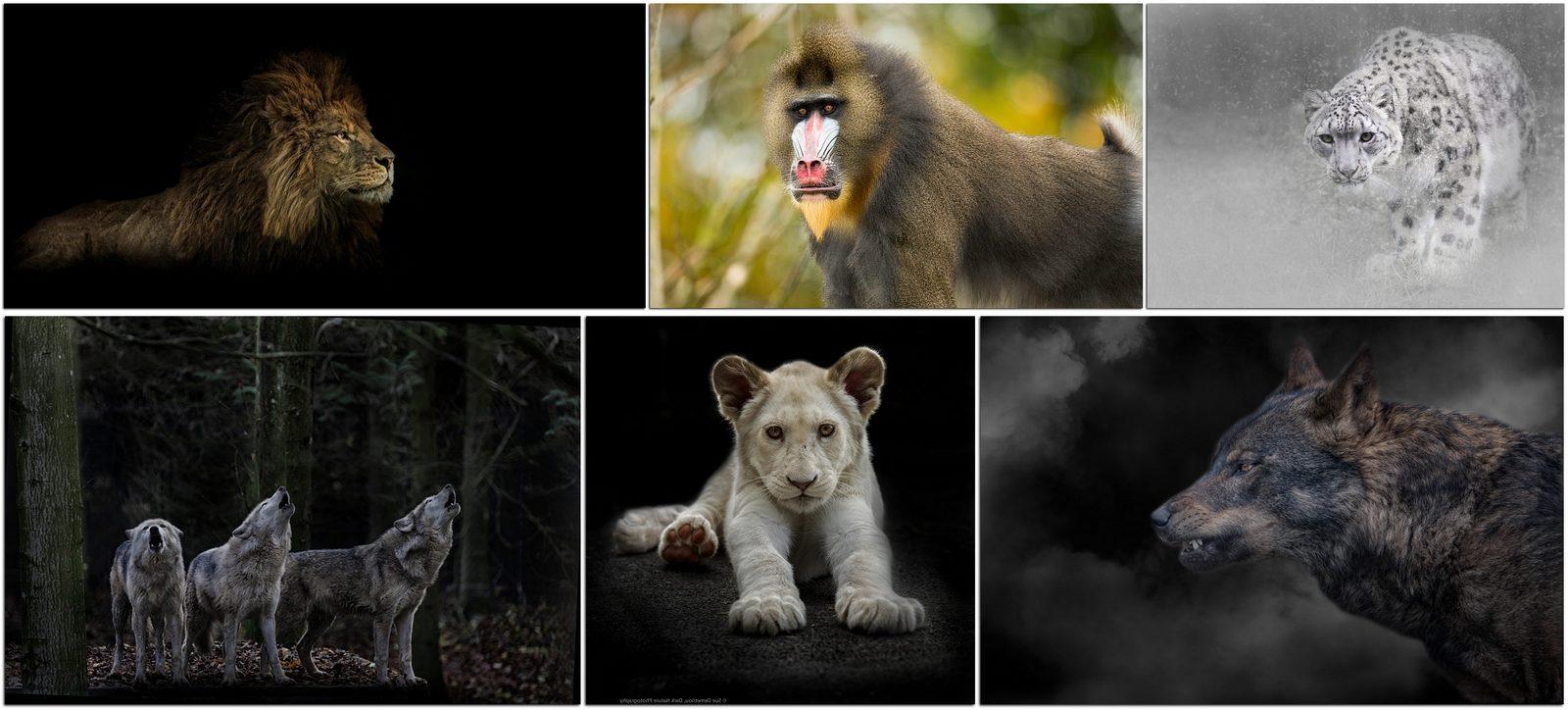 Фотографы дикой природы: Сью Деметриу