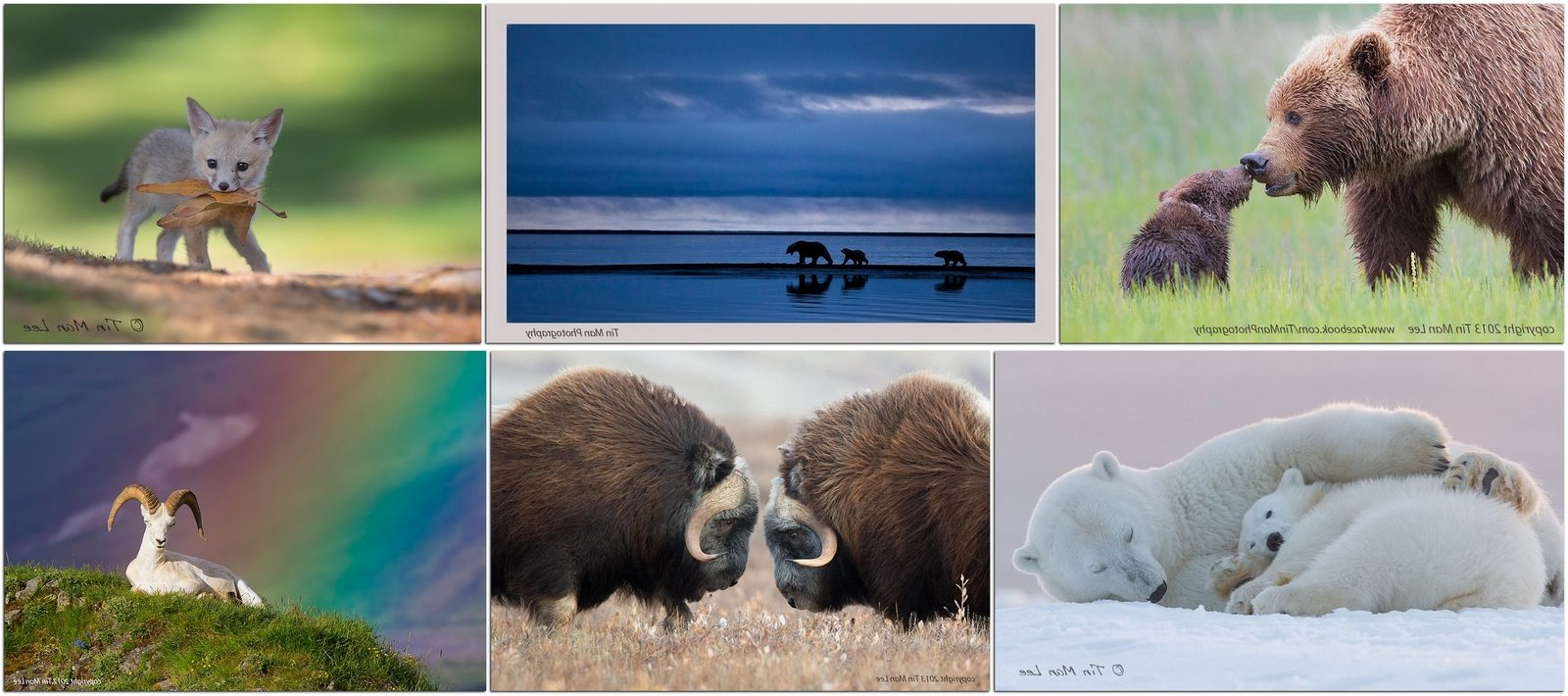 Фотографы дикой природы: Тин Мэн