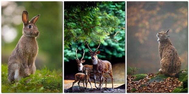 Фотосъемка диких животных