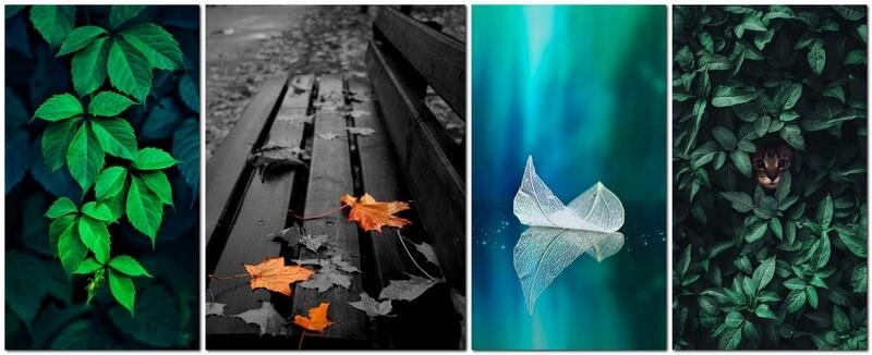 Фотографии листьев