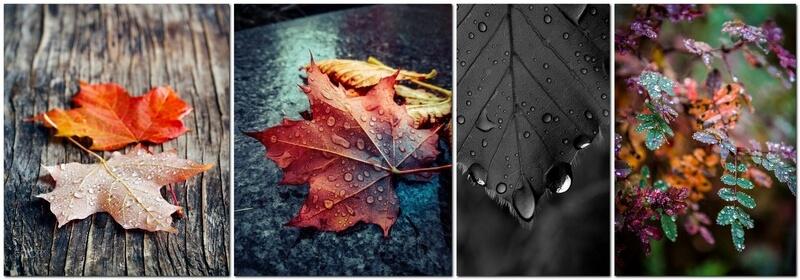 Идеи для фотографии листьев