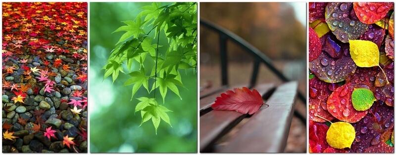 Как фотографировать листья