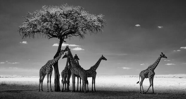 Фотограф Кен Гейгер