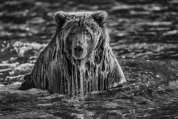 Фотограф Пол Никлен