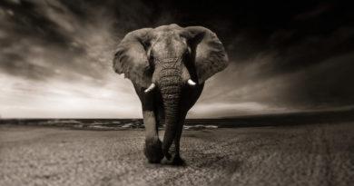 Как заработать на фотографии дикой природы